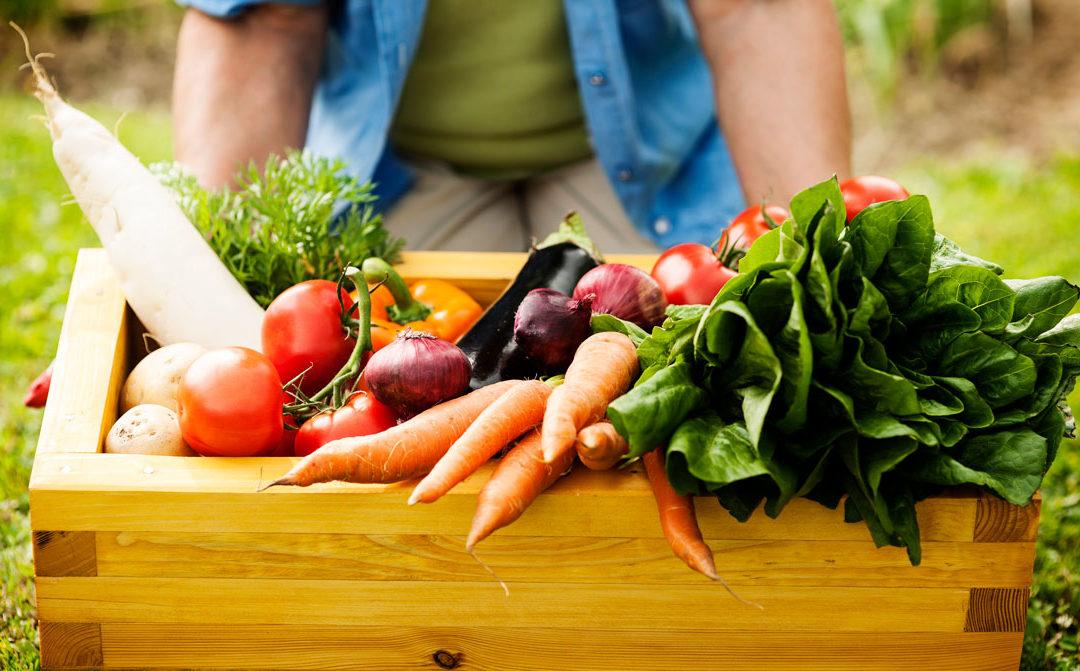 Vegetarian Week
